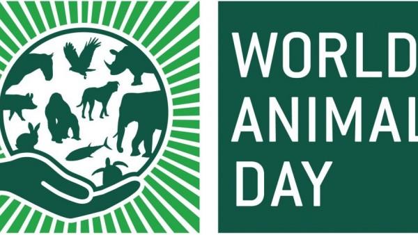 Παγκόσμια ημέρα ζώων: Αυτά είναι τα δικαιώματά τους