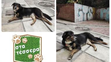 Στα τέσσερα: αδέσποτος σκυλάκος ψάχνει το παντοτινό του σπίτι