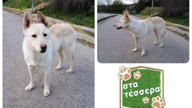 Στα τέσσερα: 'Ομορφος σκυλάκος από το Ρετζίκι ψάχνει το παντοτινό του σπίτι